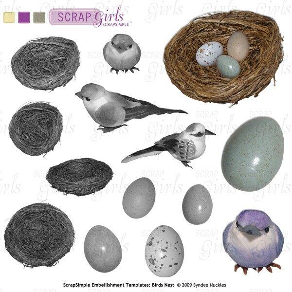 bird nest template