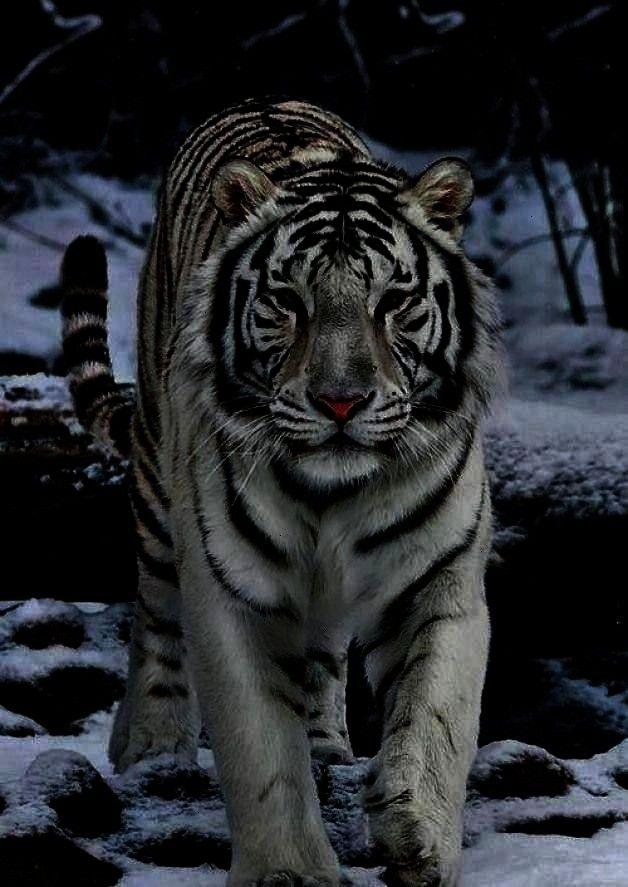 Plusle tigre blanc Plus who lb