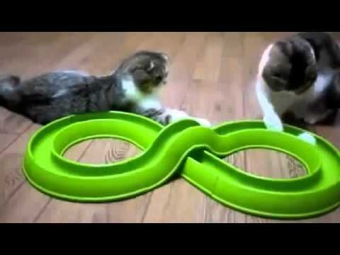 Funny Cats Compilation 2015