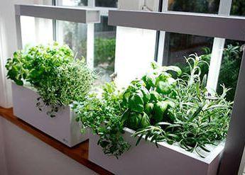 potager d 39 int rieur facile d 39 herbes et l gumes jardin d. Black Bedroom Furniture Sets. Home Design Ideas