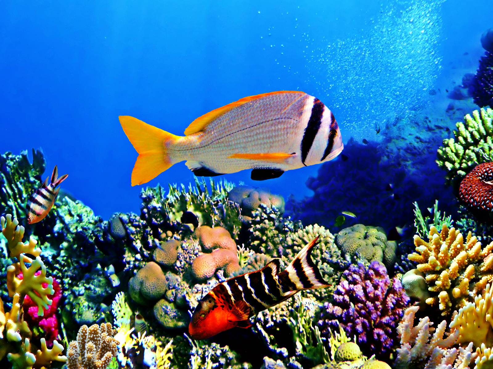 Bright Fishes Aquarium Endangered Great Barrier Reef Sea Fish