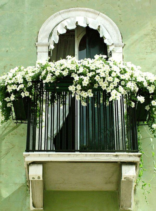 balkon pflanzen design garten gestalten weiß blumen | deko garten, Garten und erstellen