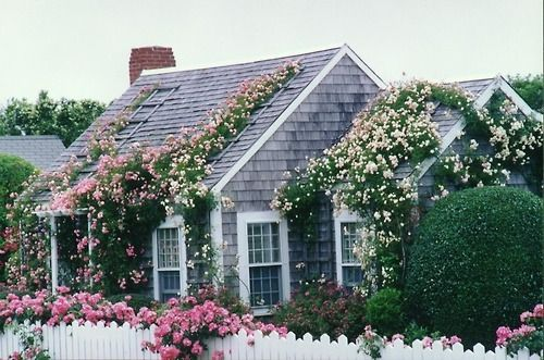 Image result for vine covered cape cod house