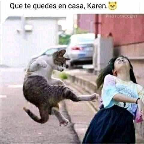 Quedate En Tu Casa Karen Memes Graciosos De Animales Memes De Animales Divertidos Memes