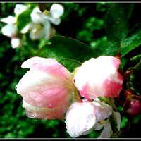 Весну любви один раз ждут.