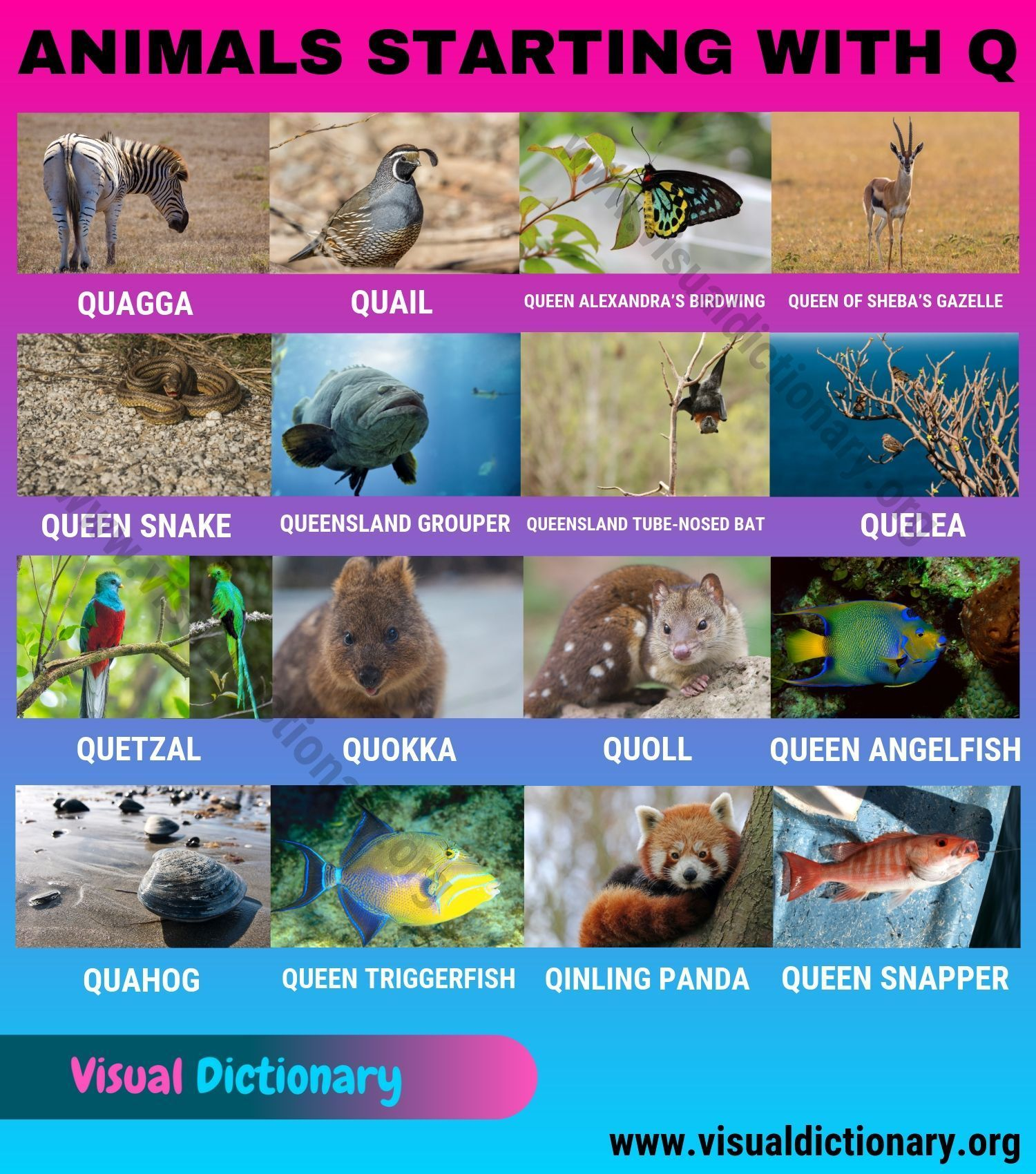 Animals That Start With Q Amazing List Of 15 Animals Beginning With Q Visual Dictionary In 2020 Animals Beginning With Q Animals Starting With Q Visual Dictionary