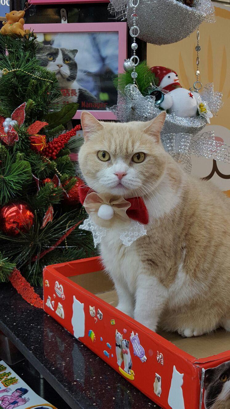 クリーム兄貴 cat