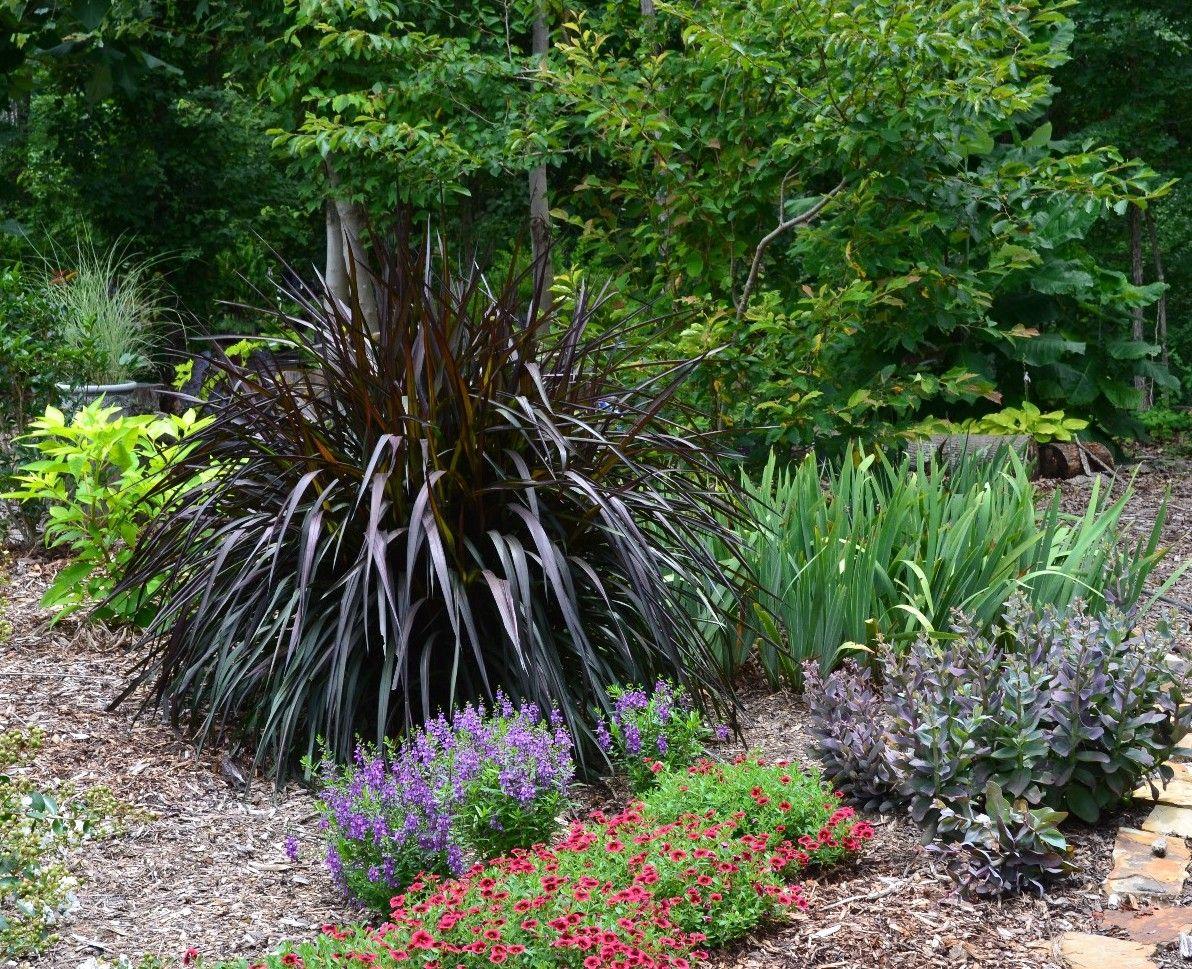 Pennisetum 39 princess caroline 39 gardening pinterest for Ornamental sea grass
