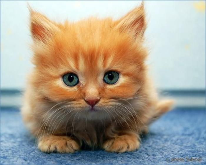 10 chatons vraiment trop mignons! , Femmes d\u0027Aujourd\u0027hui. Amour De ChatAmoureux