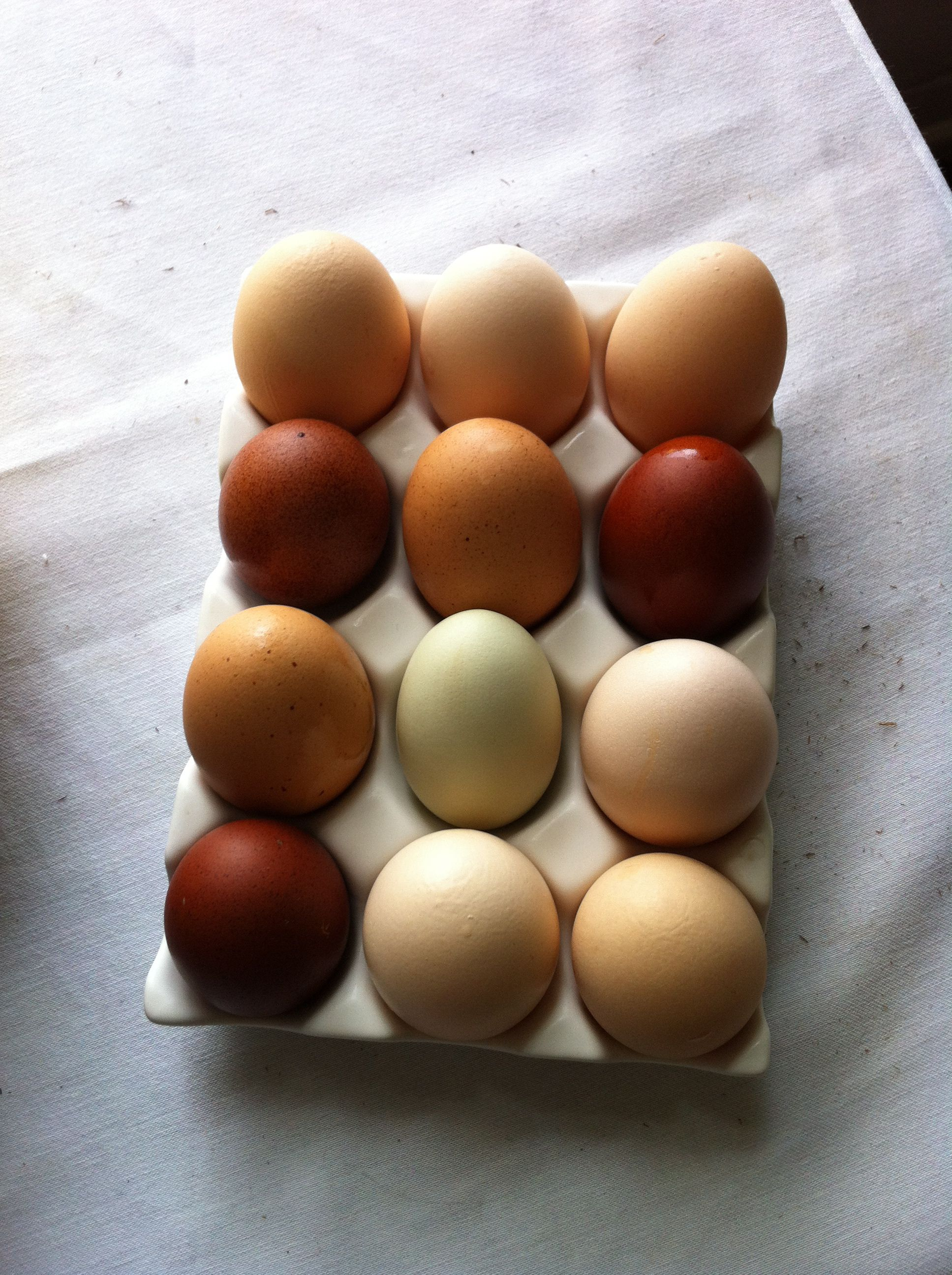 Eggs in Shades of Brown