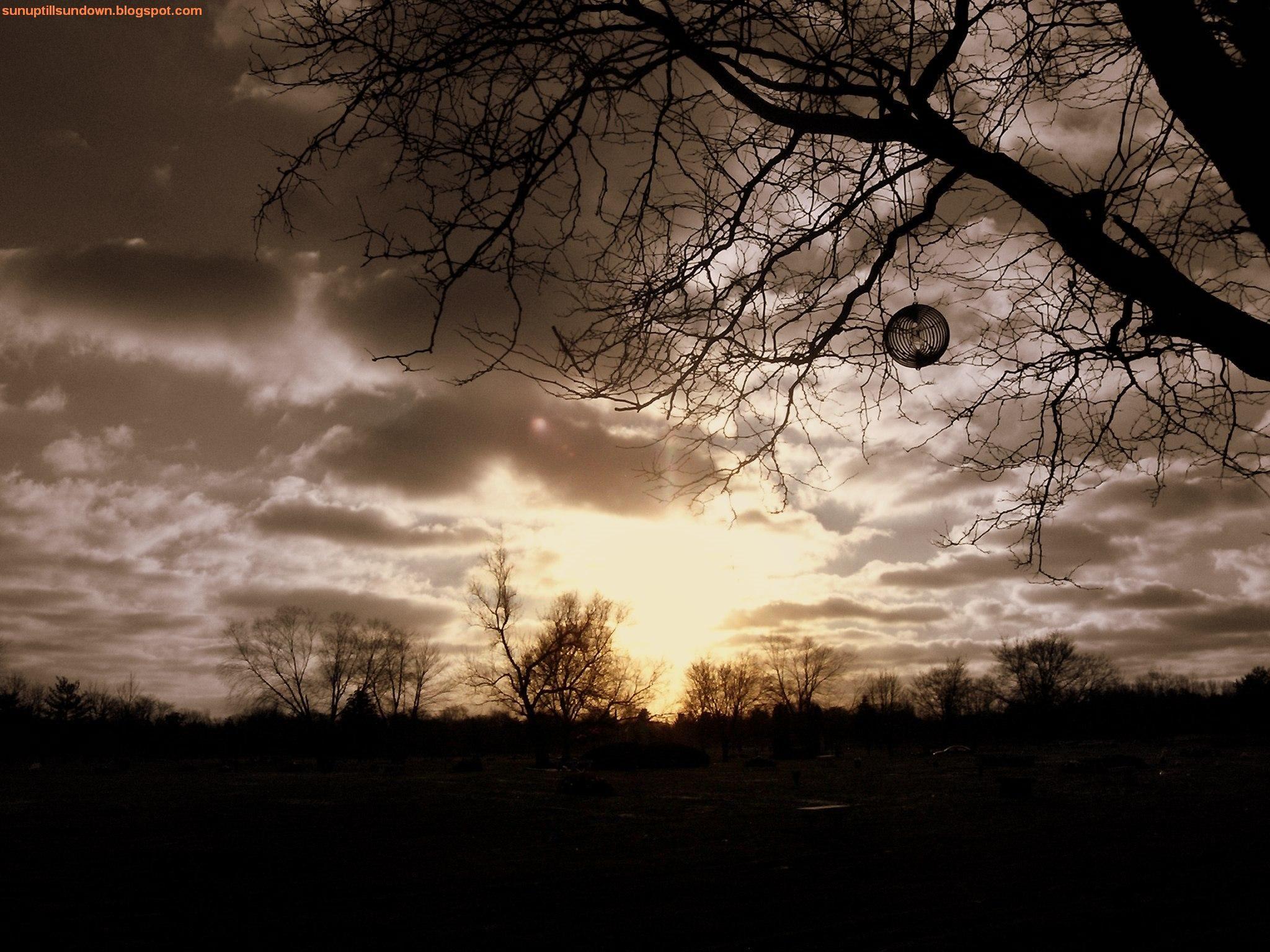 Sunset With Weird Tree.jpg (2048×1536)