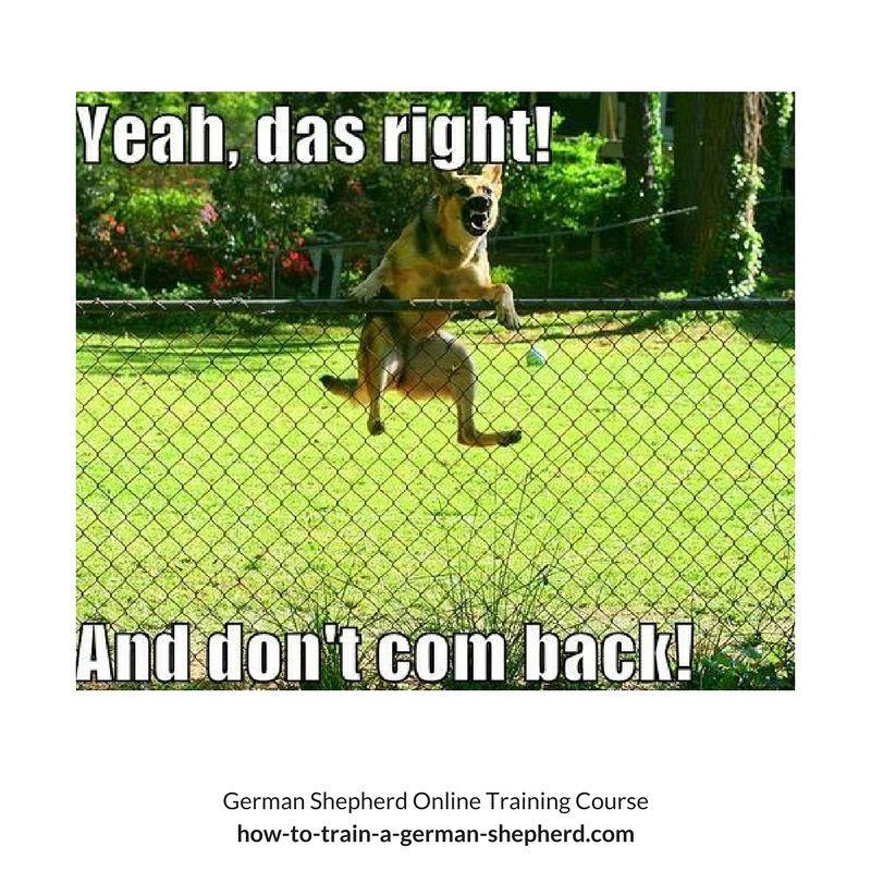 German Shepherd Memes German Shepherd Memes German Shepherd