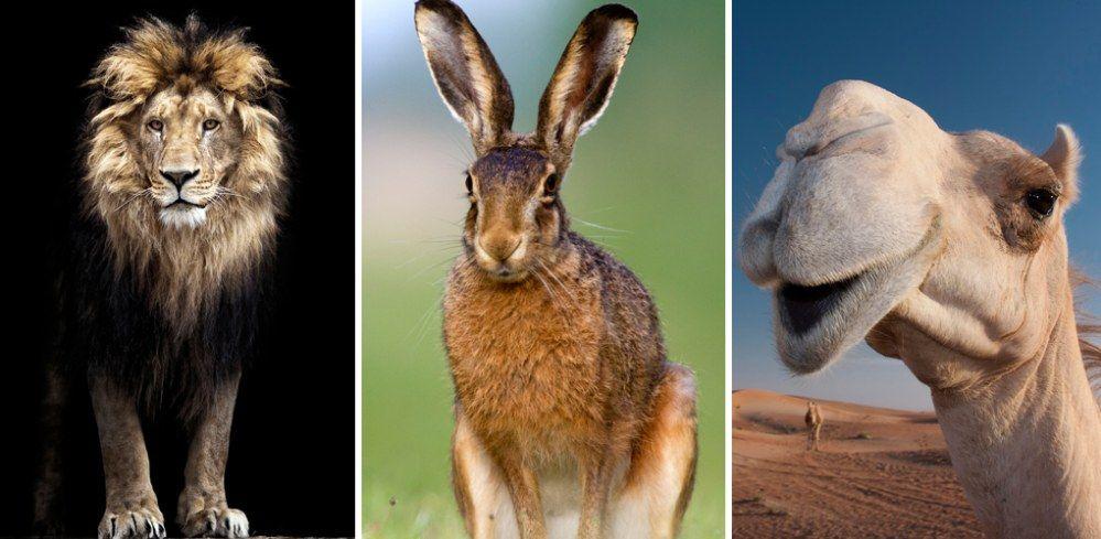Test: Als welches Tier wirst du wiedergeboren?