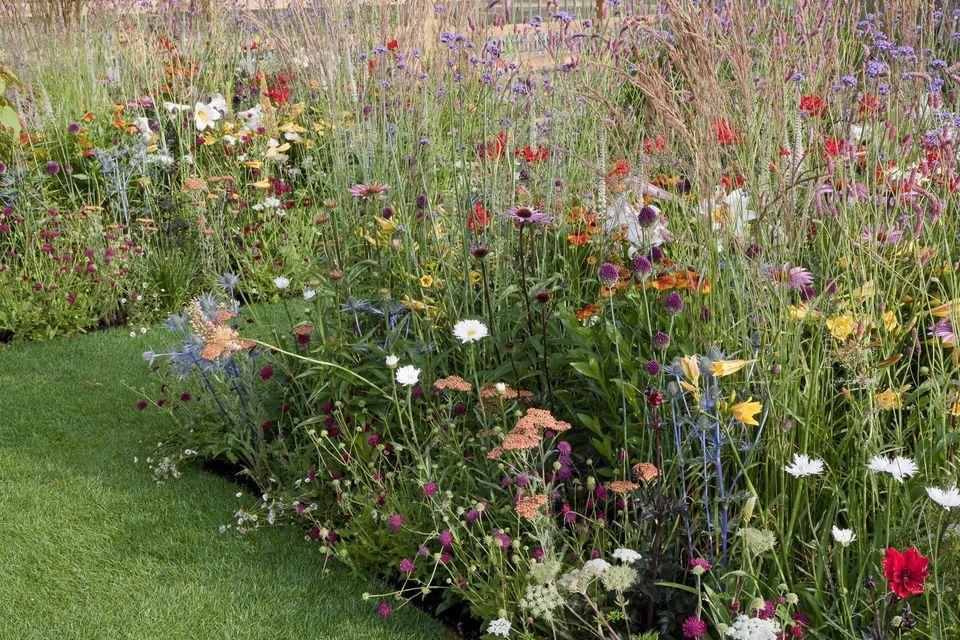 16 Pretty Flower Garden Borders For Summer Summer Flowers Garden Flower Garden Borders Wildflower Garden