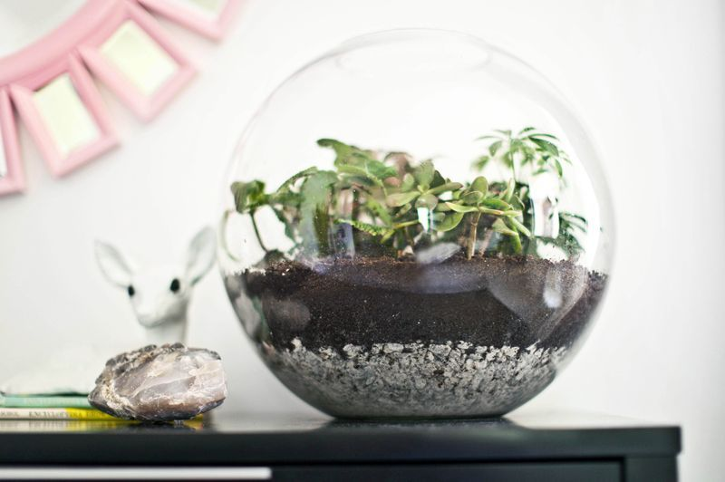 Bright and airy bedroom (before + after)      Terrarium