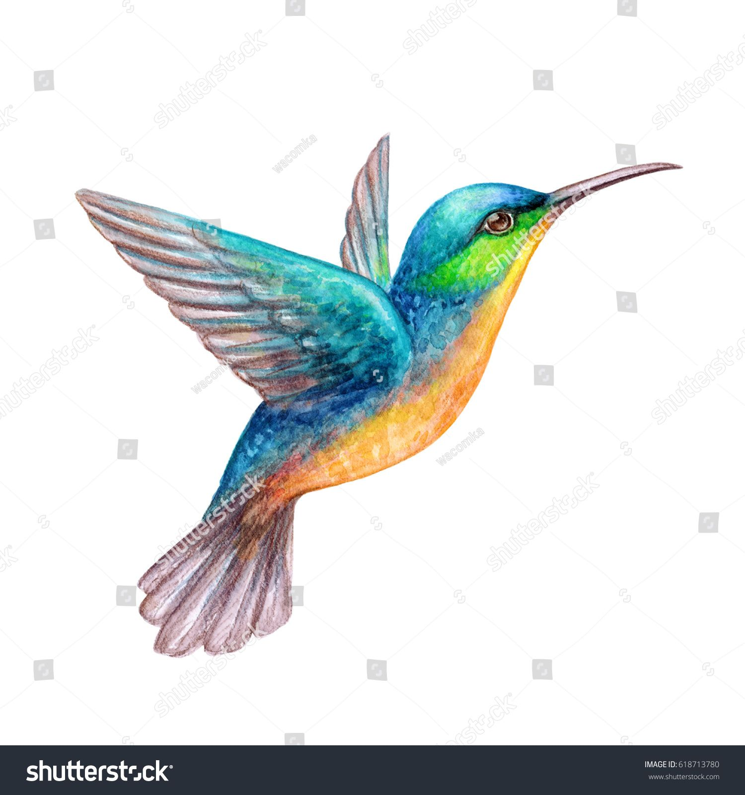 Пин на доске Hummingbird tattoo