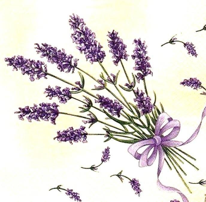 Pin by Tündér-varázs on Levendula Lavender flowers Card