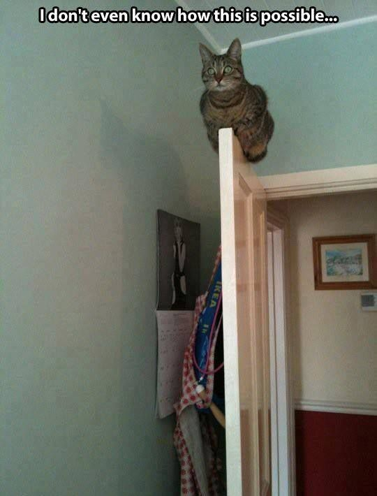 5. This cat who has decided to perch on your door like an owl.