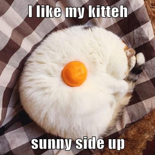 Best Funny Cats Lolcats Are now Available for Brunch Lolcats Are now Available for Brunch 9