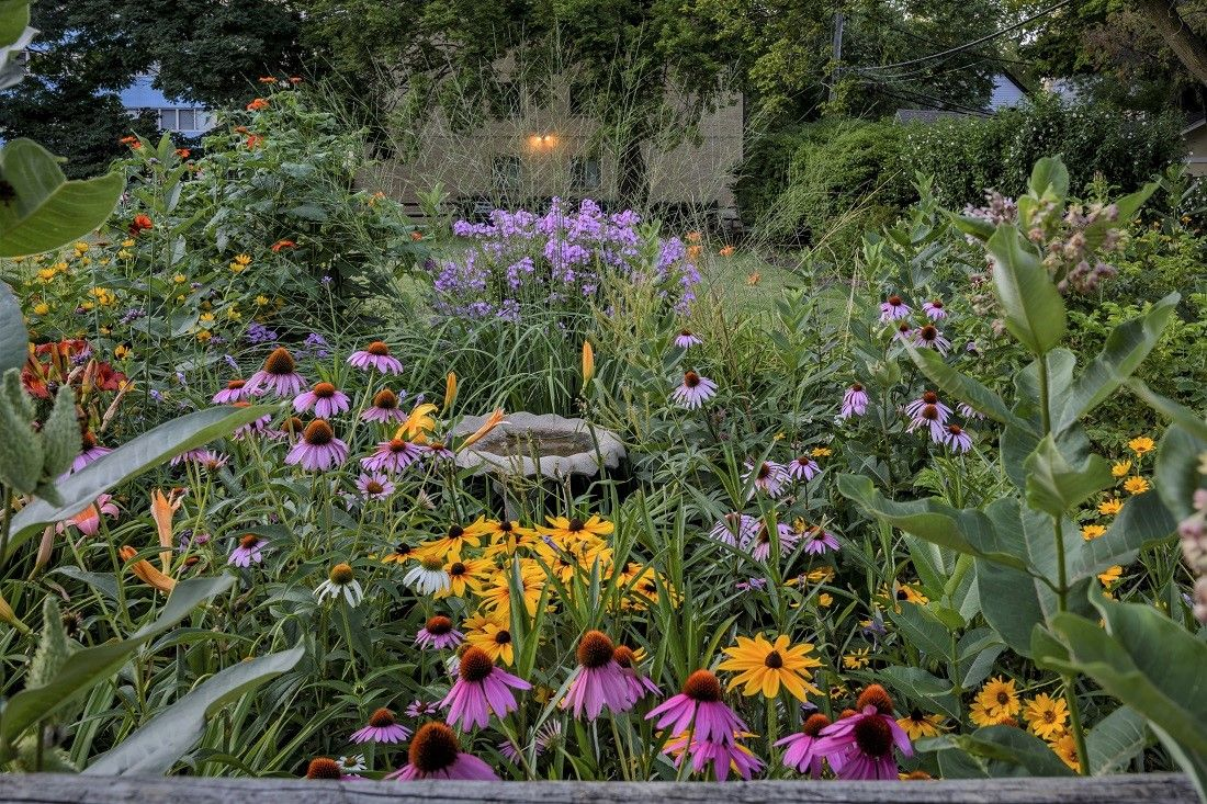 Experts advise gardeners to use native plants for a beautiful lowmaintenance and ecofriendly garden Learn why native plant species are beneficial