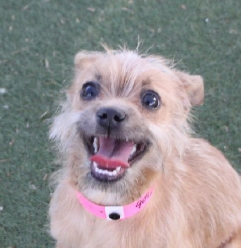 *LADY | Animal Foundation - I'm looking for a small dog to adopt. I think it is time to get another canine companion. I would like to meet this little girl!