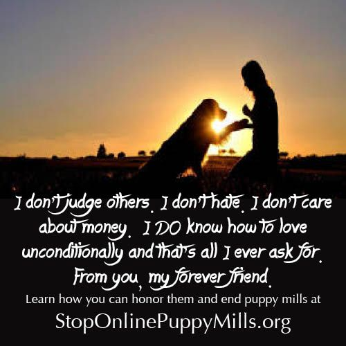 Adoption Is One Of The Best Ways To End Puppy Mills And It Will
