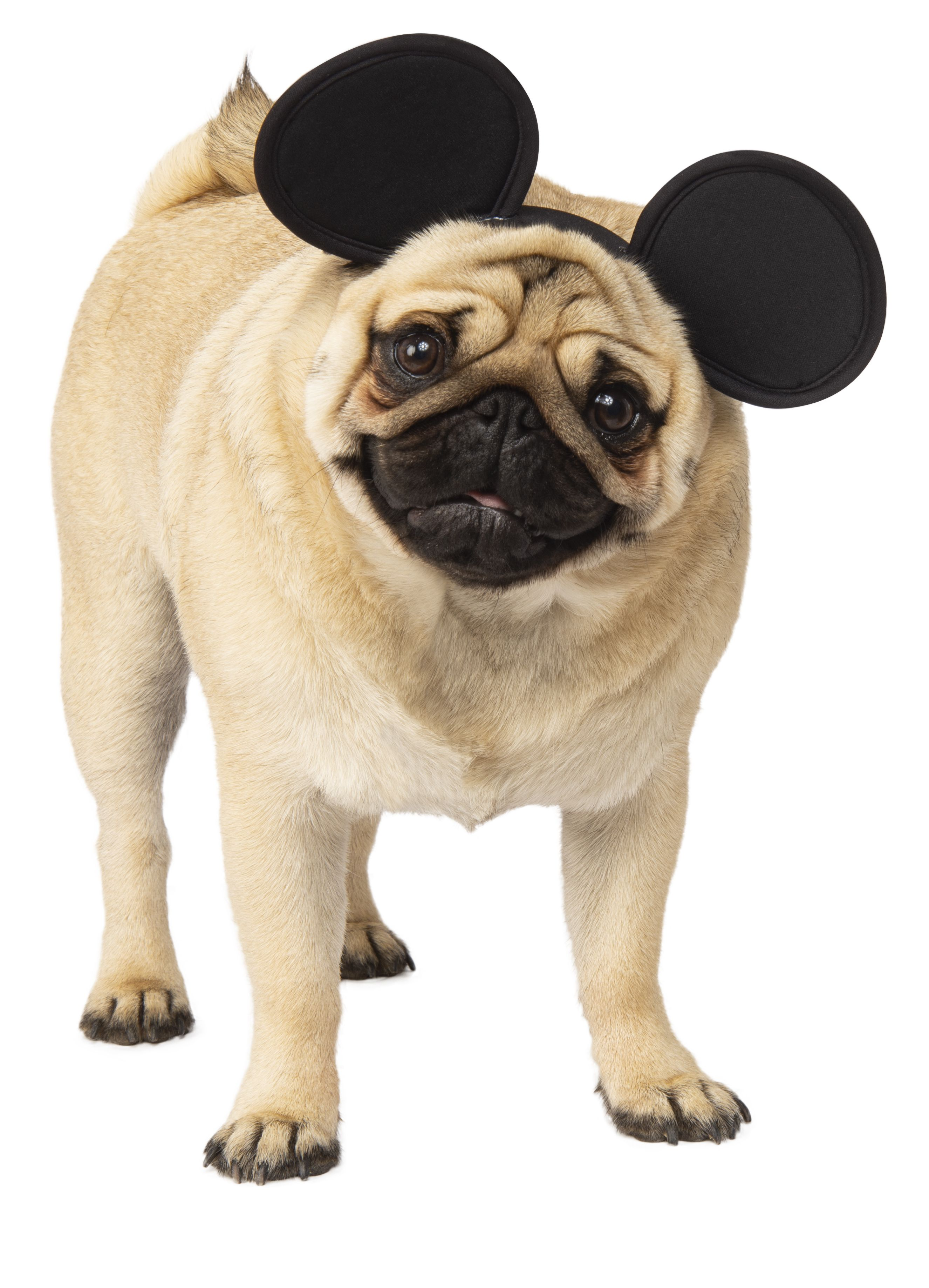 89316986063d Brand New for 2018, The Mickey Mouse Ears pet headband for dogs and cats,