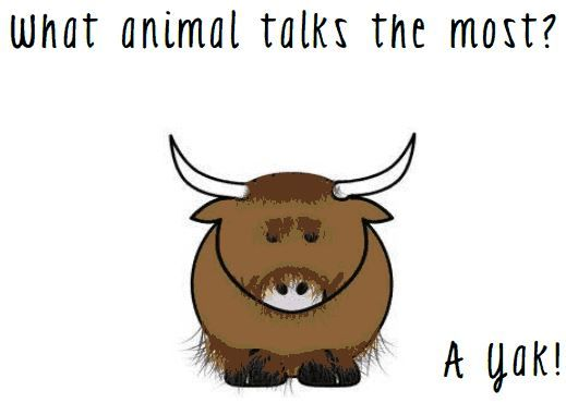 Q What Animal Talks The Most A A Yak Funny Jokes For Kids Funny Jokes Humor Inappropriate