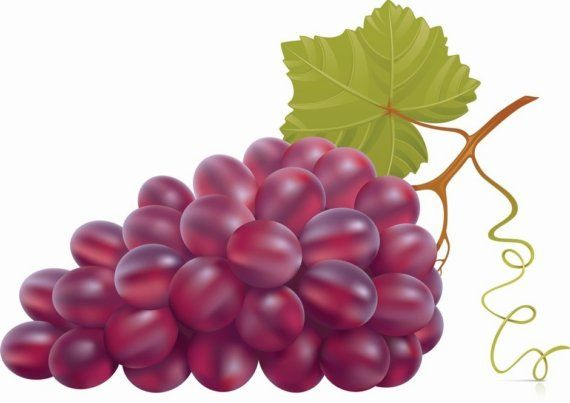Dream Baby Dream By Elina Lorenz On Etsy Grapes Fruit Picture Veggie Art