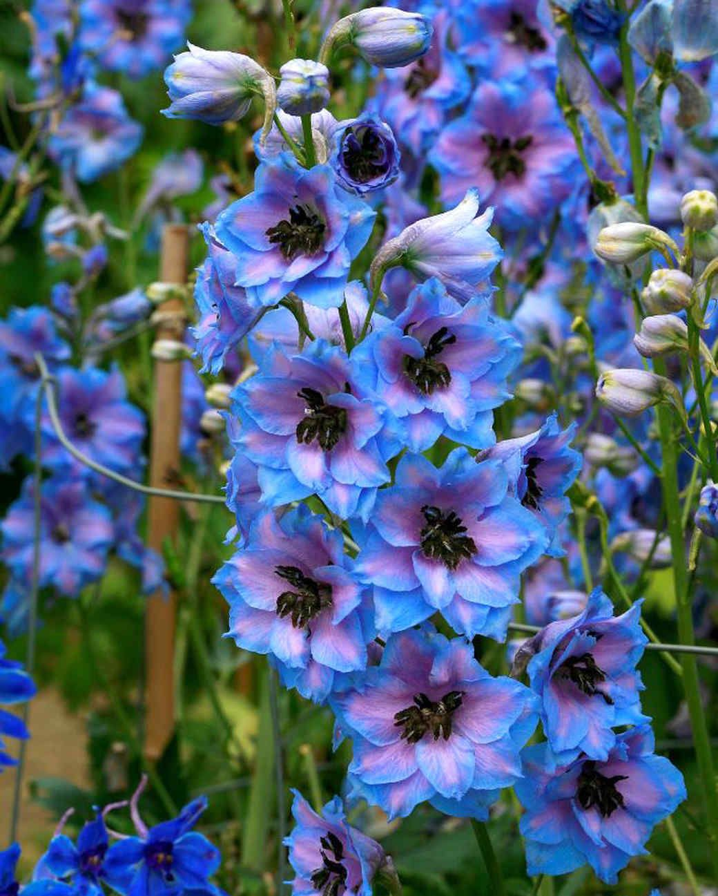 Common Hazardous Plants to Watch Out for This Summer