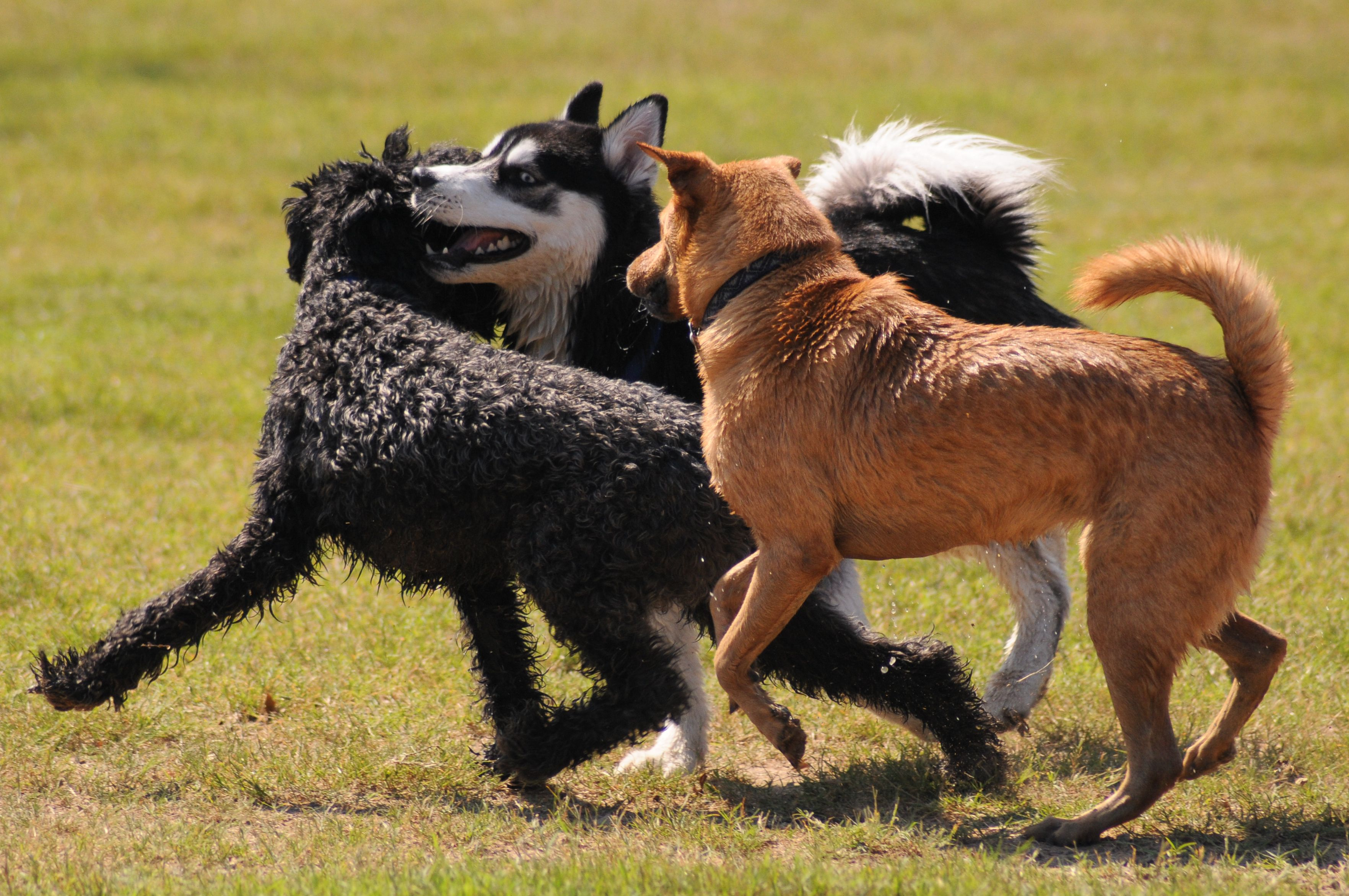 It's dog park season! I don't know about you, but every time I come within three blocks of the dog…