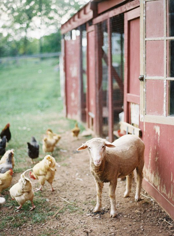 7 Farm Wedding Details We Love