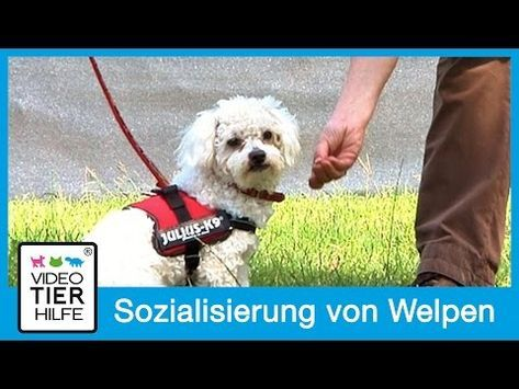 Hundefreilauf Köln