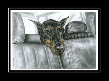 Doberman Pinscher Dog Riding in Car Art - Limited Edition Print (signed/numbered). $39.00, via Etsy.