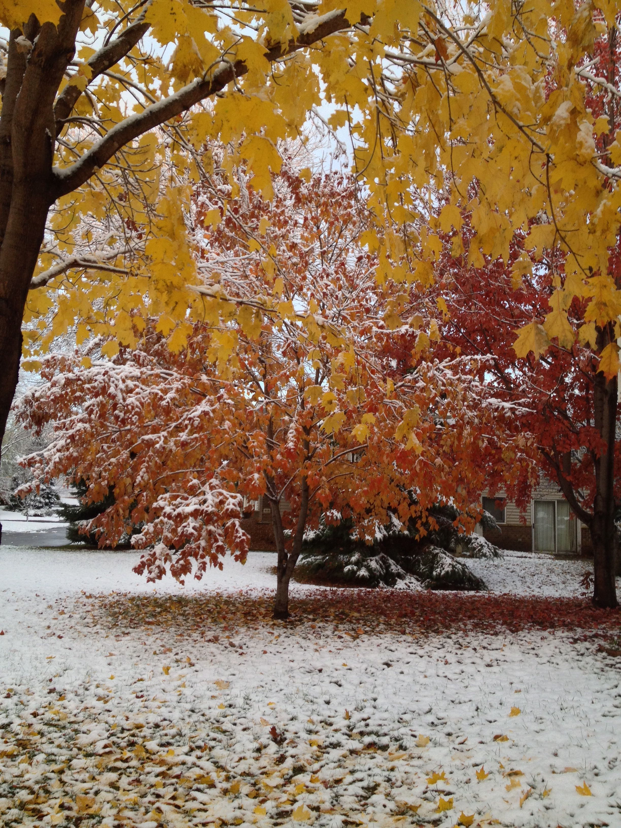 First minnesota snow of autumn 2013 my front yard in