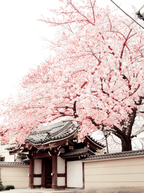 Aesthetic Nature And Blossom Image Cherry Blossom Wallpaper Aesthetic Japan Beautiful Places In Japan