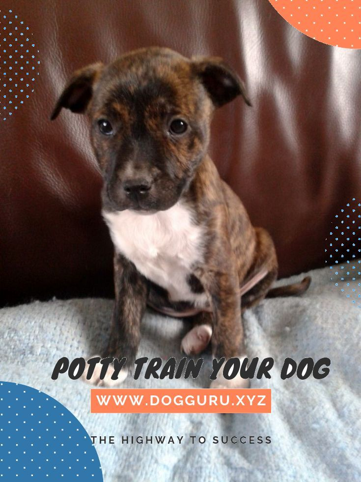 Pin By All About Dog On Puppies Training Your Dog Potty