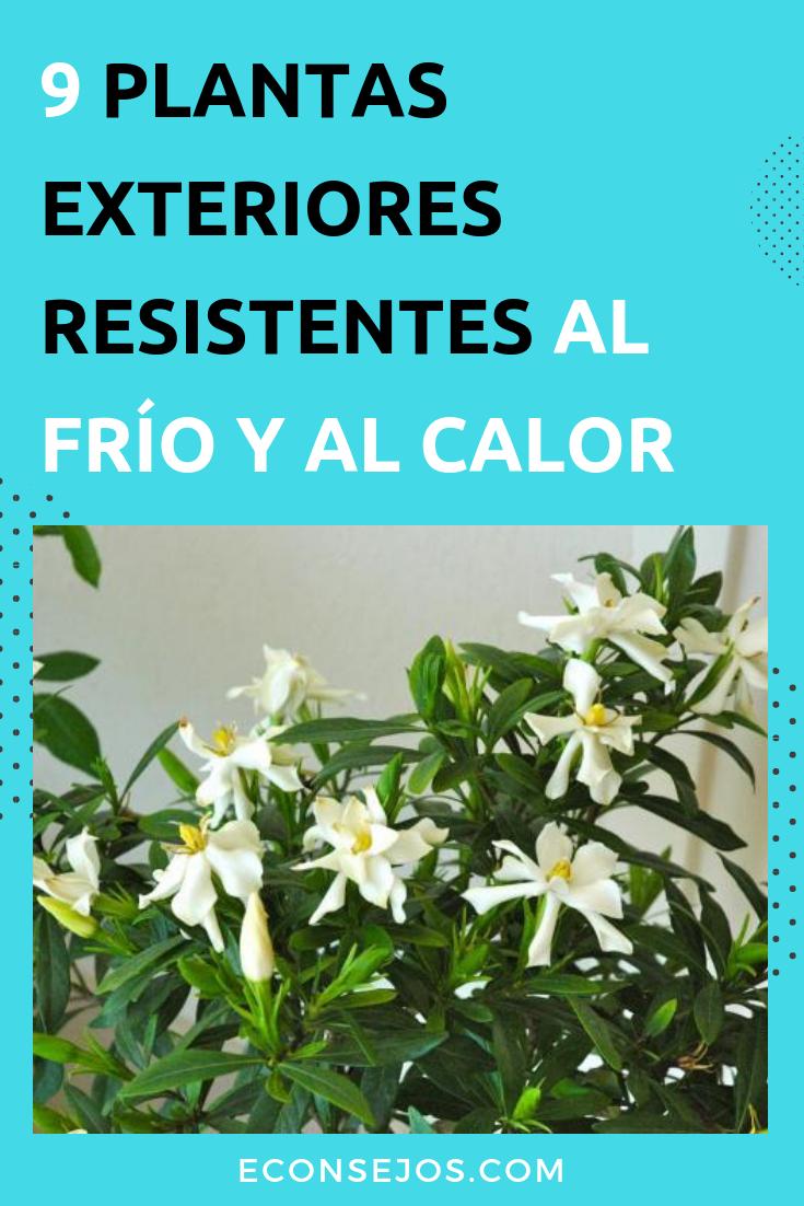 Plantas exterior resistentes al frio fabulous plantas de exterior resistentes al sol y al frio - Plantas de exterior resistentes al frio y calor ...