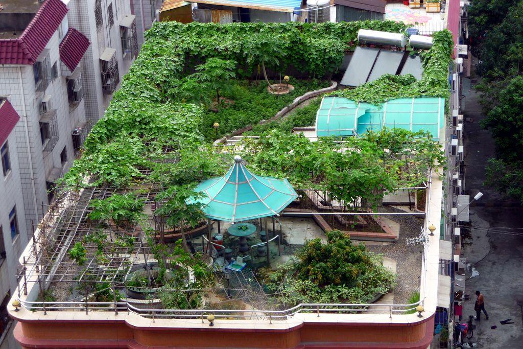 How To Start A Rooftop Garden Rooftop Garden Pergola Shade Diy