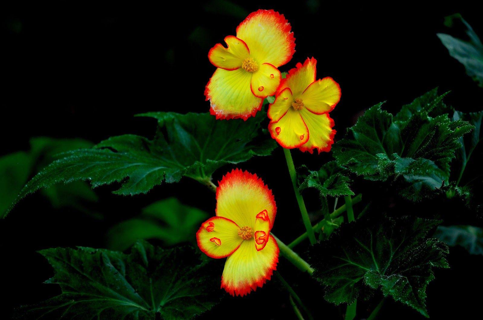 Flores Hermosas Flores Silvestres Fondos De Pantalla Gratis: Pin De Luna De Abril En FLORES