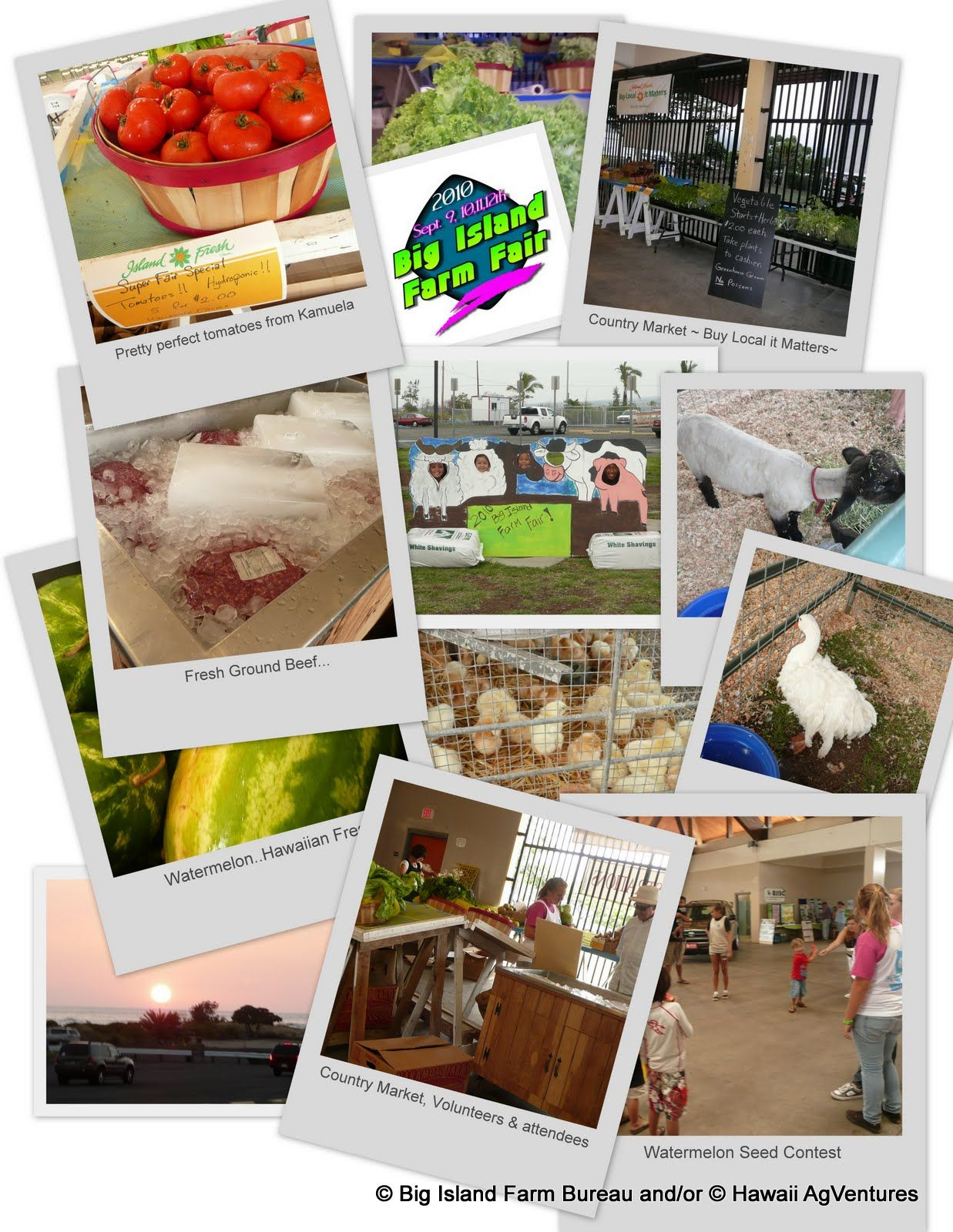 We produce the Big Island Farm Fair held annually in Kailua-Kona, Hawaii