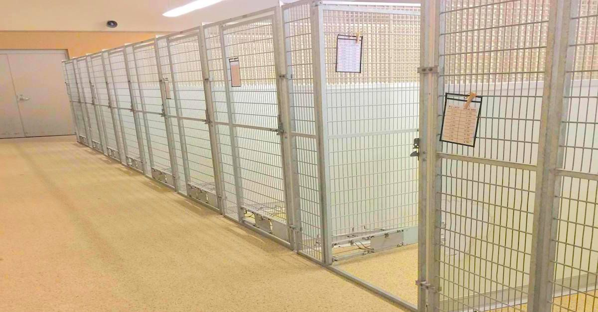 Ohio Animal Shelter Sits Empty For One Incredible Reason Animal Shelter Shelter Dog Bed