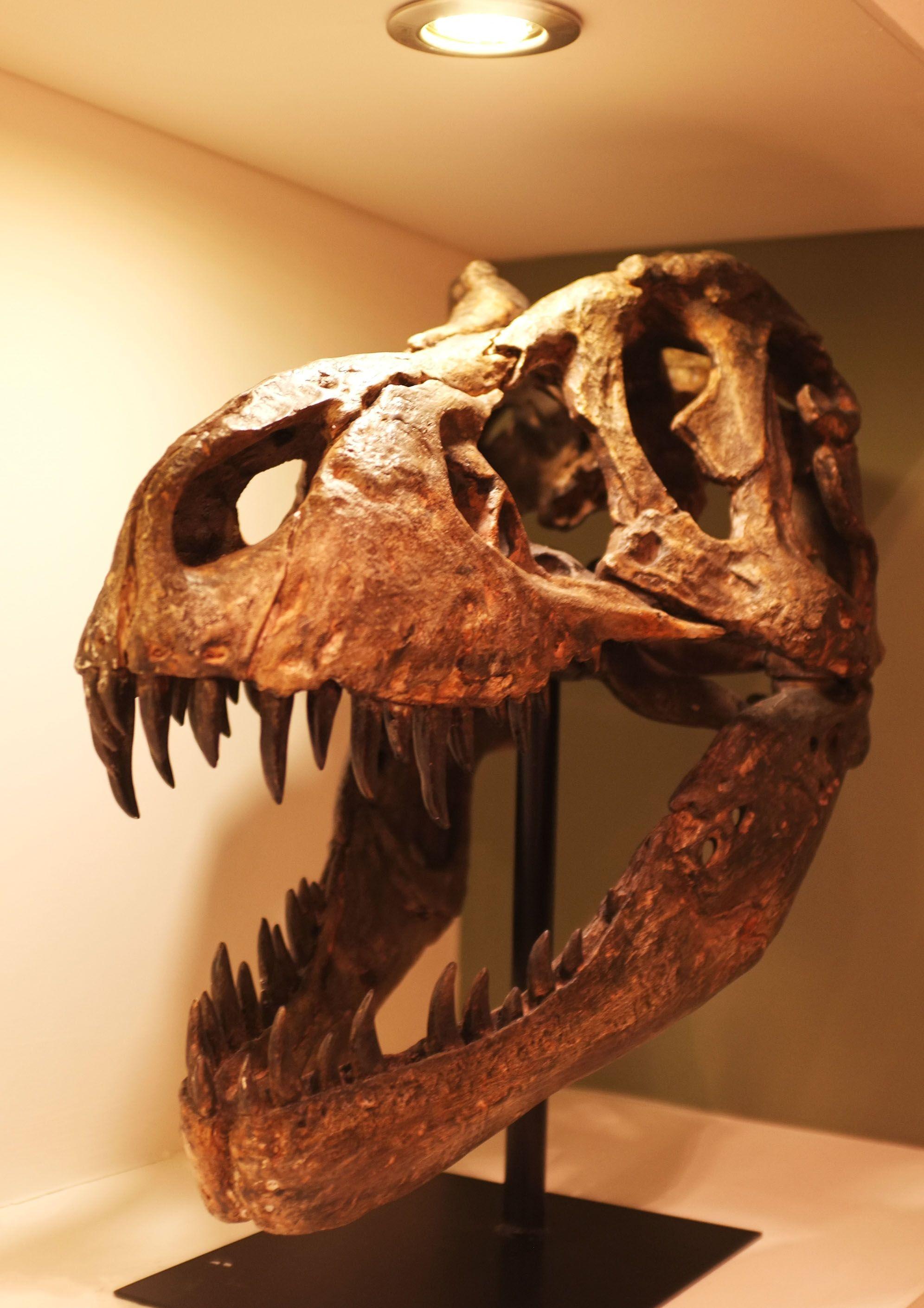 DSCF5356 Skull, Sculpture, Rex