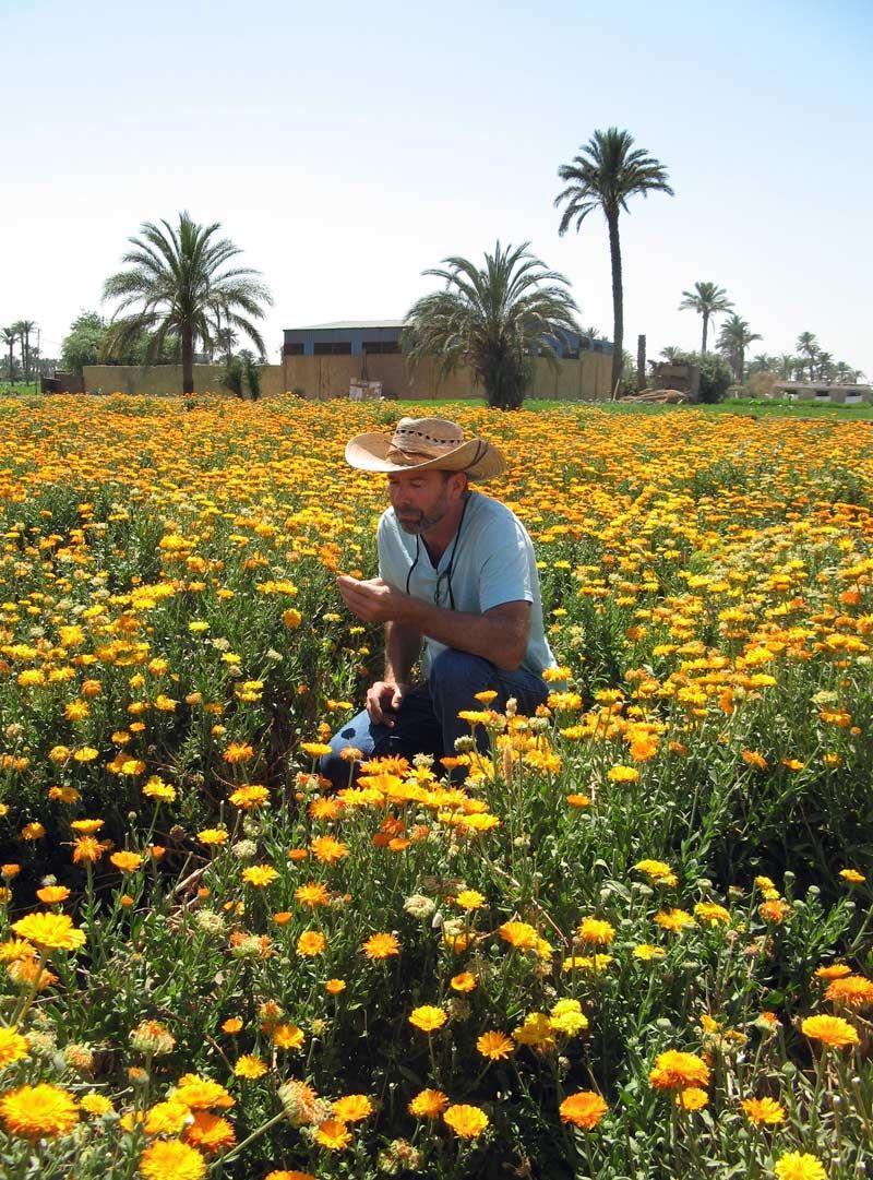 Farm stories sourcing egyptian herbs mountain rose