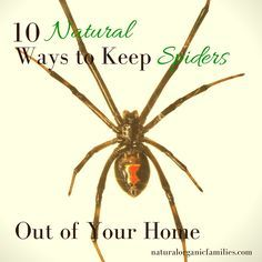 When The Weather Changes Spiders Run Indoors To Get Away From Elements Keep Those Out Of Your Home Naturally