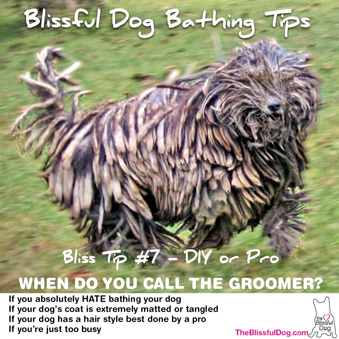 And The Last Blissful Dog Bathing Tip For Now 7 When To Call In