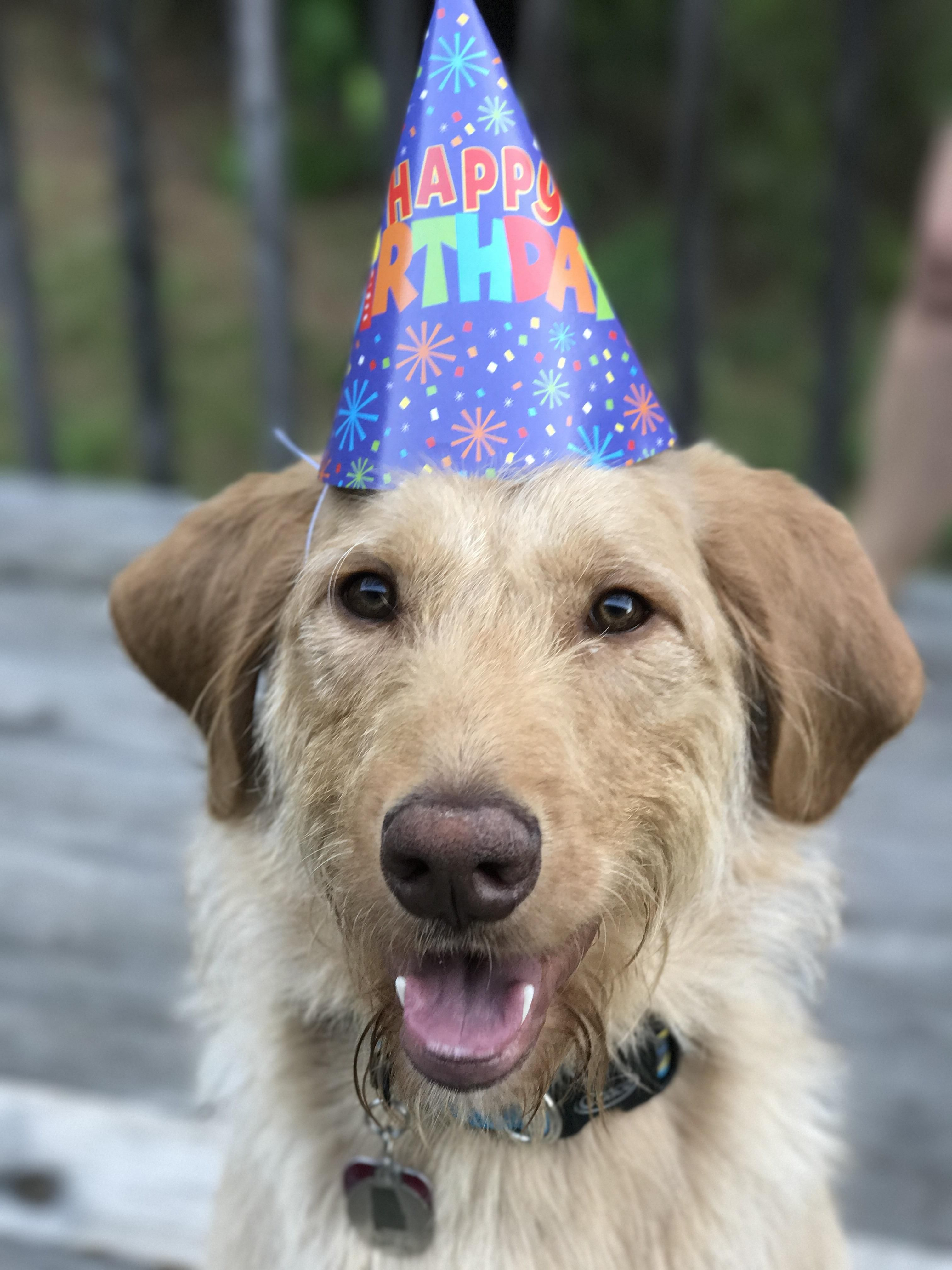 My buddy turned a year old today.