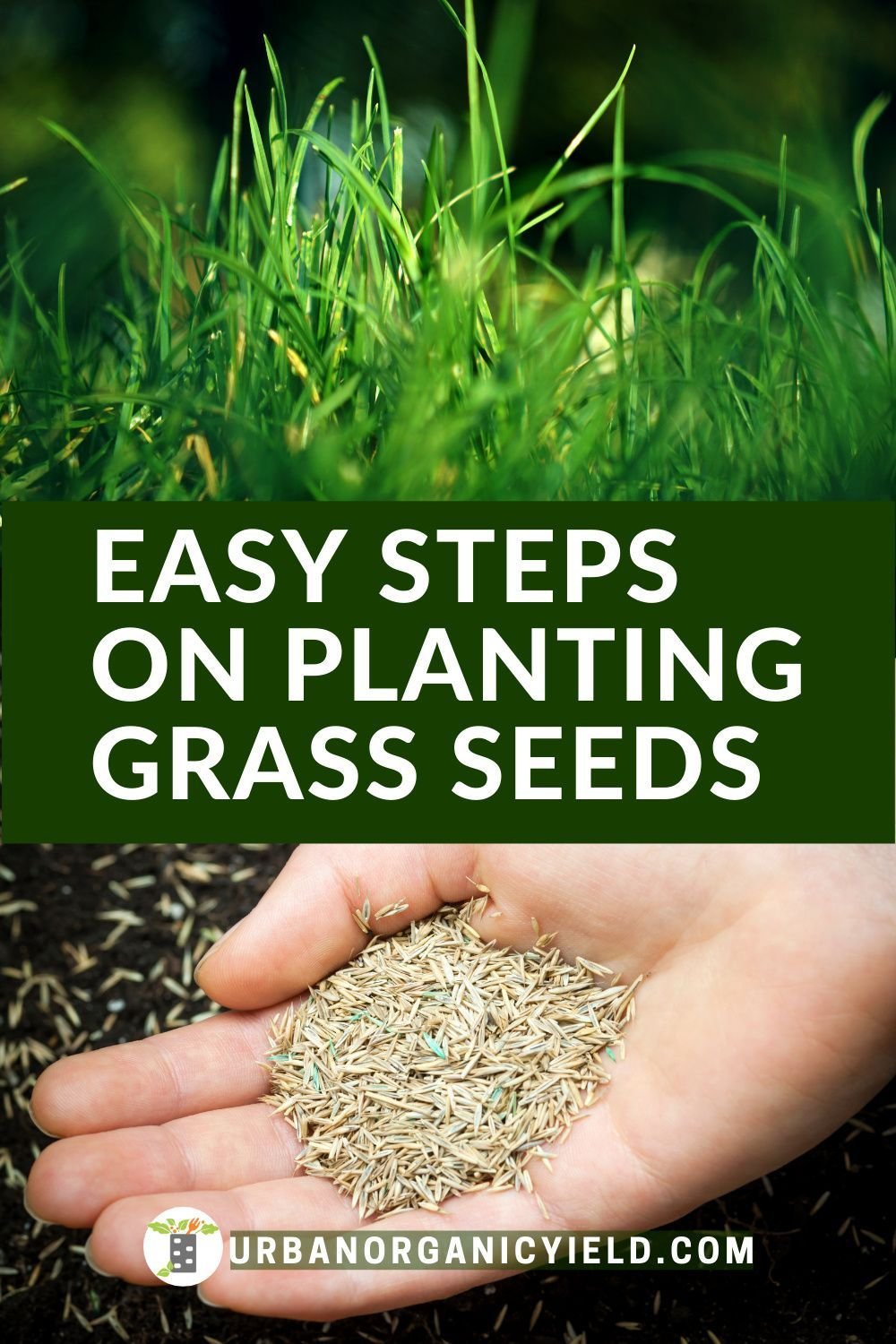 How Long Does Grass Seed Take To Grow Planting Grass Overseeding Lawn Grass Seed