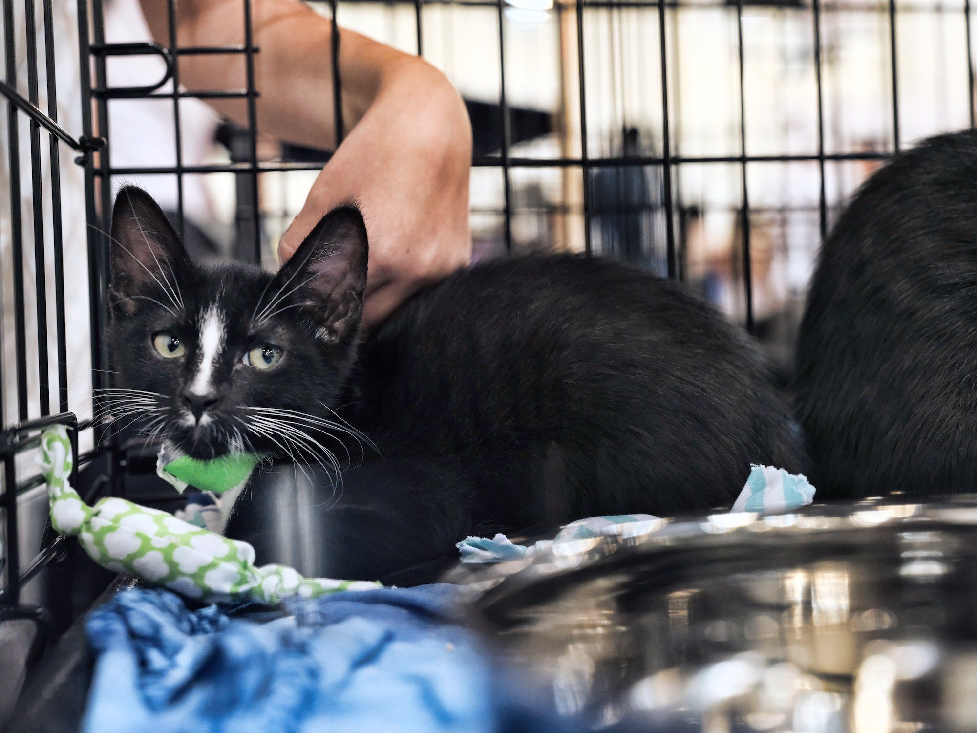 California Pet Stores Can Only Sell Rescue Animals Pet Store Animals Kitten Adoption