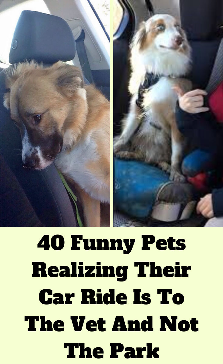 Latest Funny Pets 40 Funny Pets Realizing Their Car Ride Is To The Vet And Not The Park Here's a list of 75 kids who found some of the funniest and most awkward places to get stuck in. The looks on their faces says it all and thankfully no one was hurt – except maybe their pride when they see proof of their shenanigans when they are little older. 40 Funny #Pets Realizing# Their Car# Ride Is To The Vet And Not# The #Park